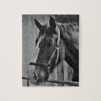 Black White Horse - Animal Photography Art Puzzle