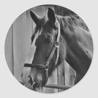 Black White Horse - Animal Photography Art Round Sticker