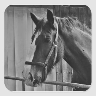 Black White Horse - Animal Photography Art Square Sticker