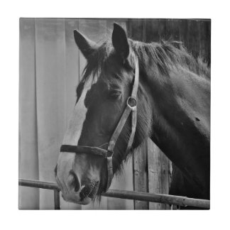 Black White Horse - Animal Photography Art Tile