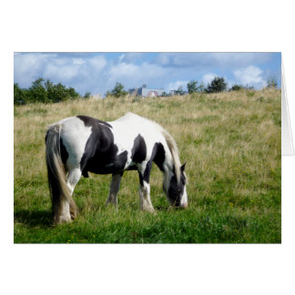 Black & White Horse Blank Greeting Card