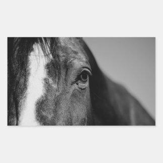 Black White Horse Eye Artwork