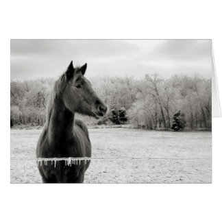 Black & White Horse Greeting Card