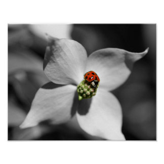 Black White Ladybug On Dogwood Nature Poster