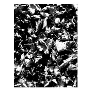 Black & White Leaves Postcard