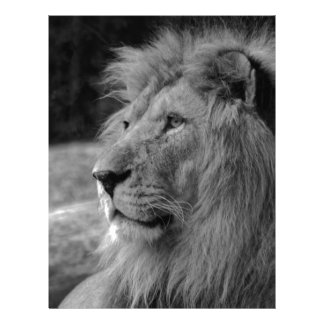 Black & White Lion - Wild Animal Letterhead