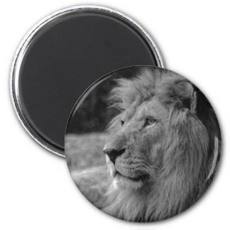 Black & White Lion - Wild Animal Magnet