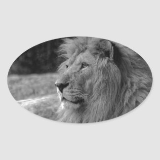 Black & White Lion - Wild Animal Oval Sticker
