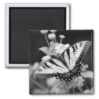 Black & White Monarch Butterfly Magnet