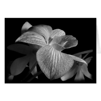 Black & White Orchid Note Card