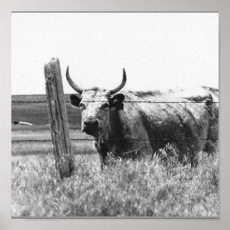 Black & White Photo Cow Poster