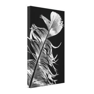 Black & White Photography Feather Art Canvas Print