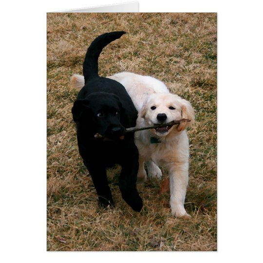 Black & white puppies note card
