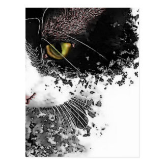 Black & White Pussycat Postcard