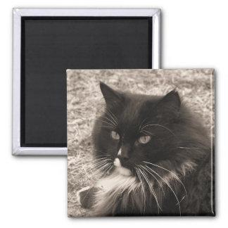 Black & White Rag doll Cat Magnet