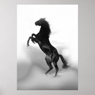 Black White Rearing Horse Poster