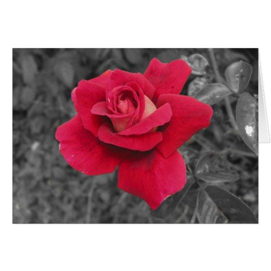 Black White Red Rose Cards