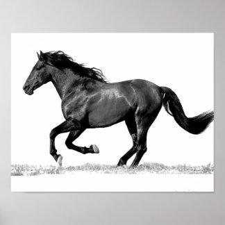 Black & White Running Horse Poster