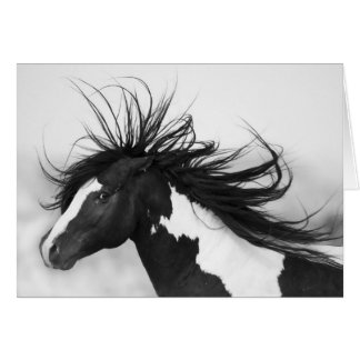Black & White Stallion Wild Horse Greeting Card