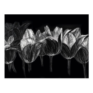 Black White Tulip Garden Flower Scratchboard Art Postcard