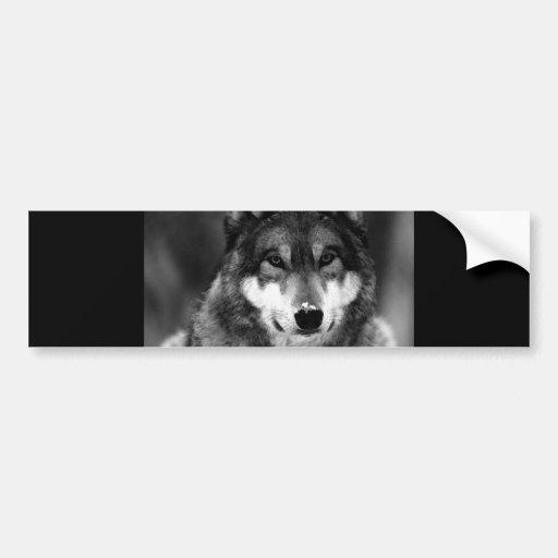 Black & White Wolf