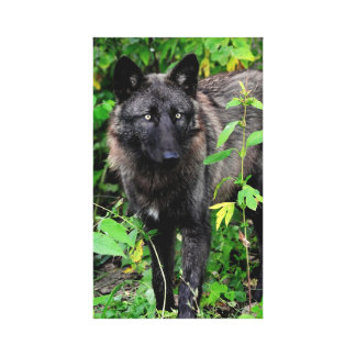 Black Wolf Stretched Canvas Print