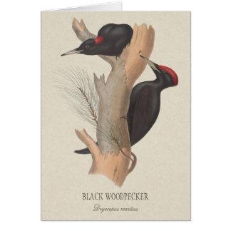 Black woodpecker CC0223 Gould bird illustration Card
