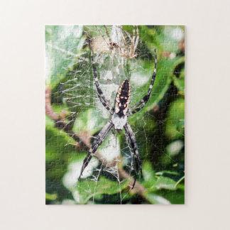 Black & Yellow Argiope Garden Spider Puzzle