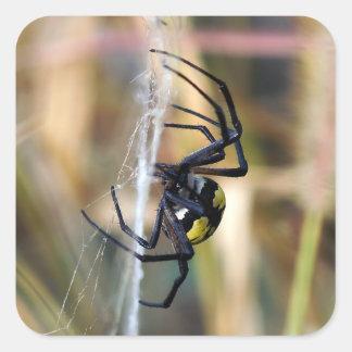 Black & Yellow Argiope Garden Spider Sticker