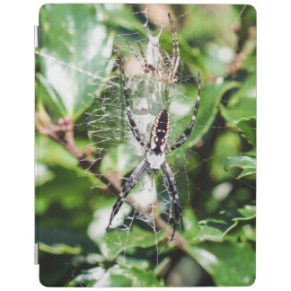 Black & Yellow Garden Spider iPad Smart Cover