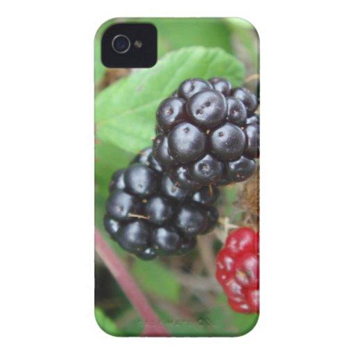 Blackberries Blackberry Bold case