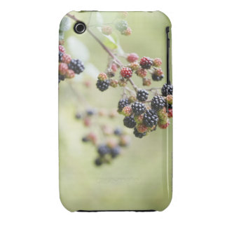 Blackberries growing outdoors. iPhone 3 case