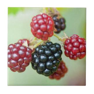 blackberries tile