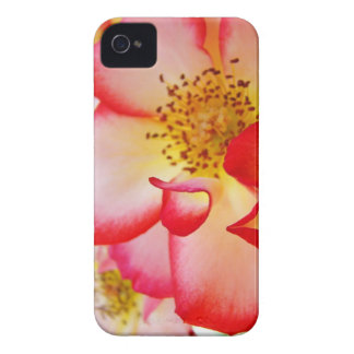 Blackberry Bold  cell phone covers Rose Flowers iPhone 4 Cover