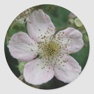 Blackberry Flower Macro Sticker