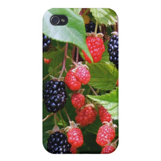 Blackberry Patch iPhone 4/4S Covers
