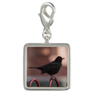 Blackbird Charm
