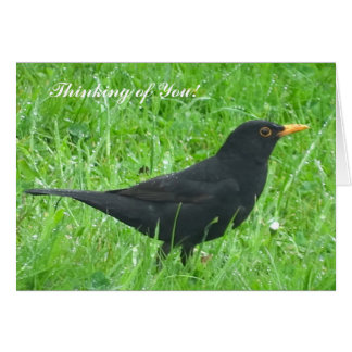 Blackbird image for Get well soon card