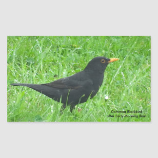 Blackbird image for Rectangle Stickers, Glossy Sticker