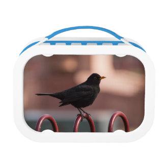 Blackbird Lunch Box