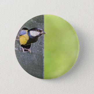 Blackbird parent in hole of nest box 2 inch round button