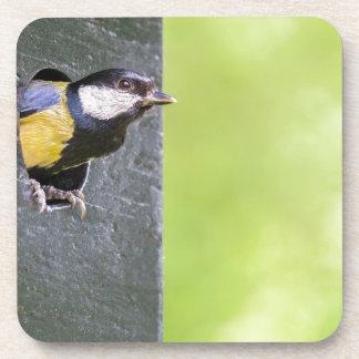 Blackbird parent in hole of nest box drink coaster