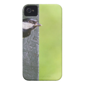 Blackbird parent in hole of nest box iPhone 4 cases