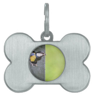 Blackbird parent in hole of nest box pet name tag