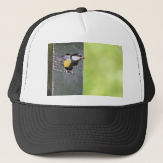 Blackbird parent in hole of nest box trucker hat