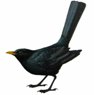 Blackbird Sculpture Standing Photo Sculpture