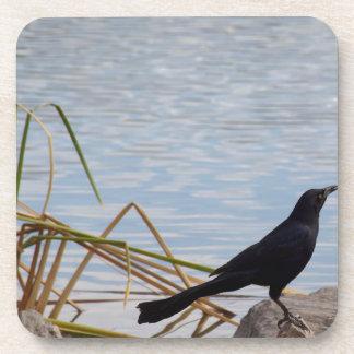 Blackbird Sing Coaster