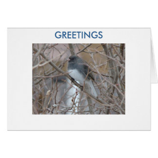 Blackeyed Junco,GREETINGS ,Thinking of You Card