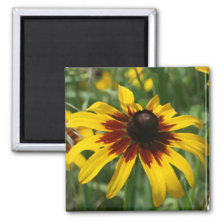 Blackeyed Susan Magnet