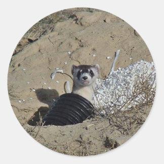 Blackfooted Ferret Round Sticker